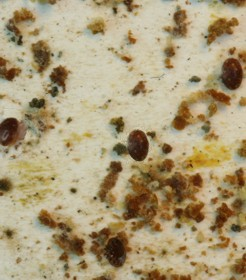 Bodenwindel mit Varroamilben