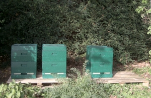 Standort für Bienenvölker