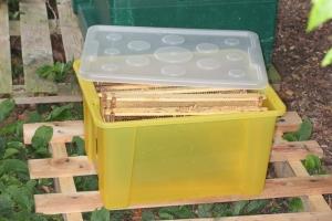 Transportkiste für Honigwaben