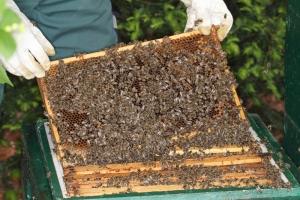 die eignen Bienen - erste Durchsicht