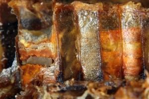 Eingelagerter Pollen in einer Brutwabe (Futterkranz)