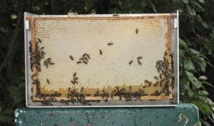 Honigwabe - vollständig verdeckelt