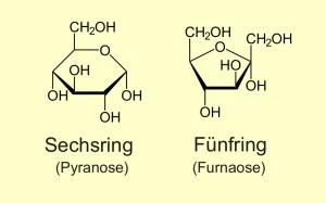 Grundgerüst der Zucker  Glukose und Fruktose