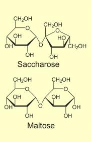 Zweifachzucker - Disaccharide