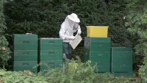 Honigernte - Entnahme der Waben