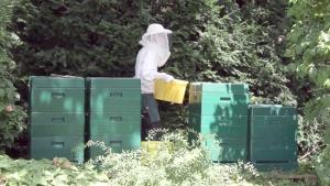 Honigernte - Abtransport der Honigwaben
