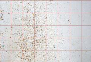 Bodeneinlage - Varroamilben auszählen